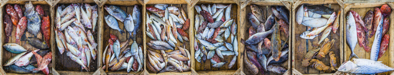 Fresh fish at a market in a Mediterranean port, collage