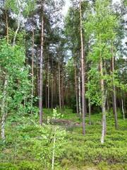 schöner Waldblick