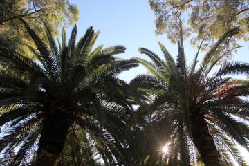 Beautiful palm garden-Carthage-Tunisia