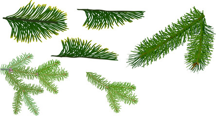 six green coniferous branches collection