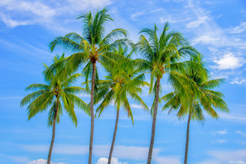 Group of palm trees, blue sky background