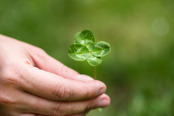four leaf clover in woman hand