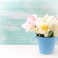 Background with fresh narcissus and tulips  flowers