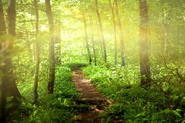 Fototapeten Wald Footpath in forest with sunlight
