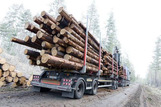 Timber truck on swedish dirt road