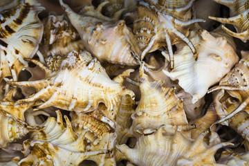 Seashells souvenirs for sale