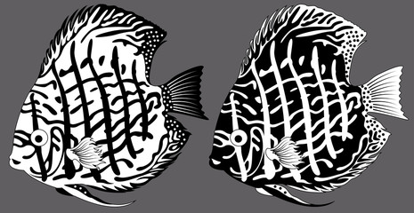 vector black and white aquarium fish discus