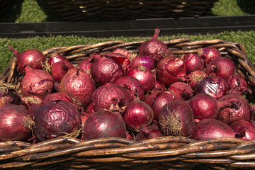 Onions in the basket