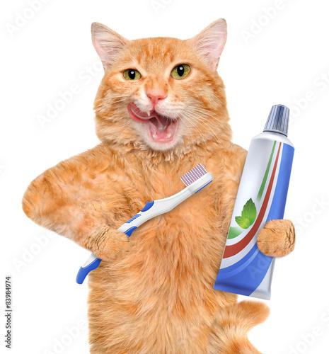 Feline dental toys