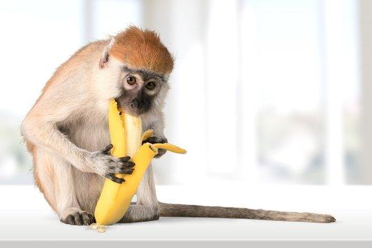 Monkey, Banana, Primate.