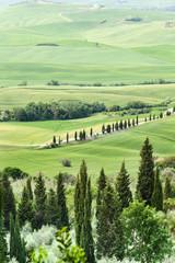 Poster de jardin Vignoble Spring landscape of fields Tuscany