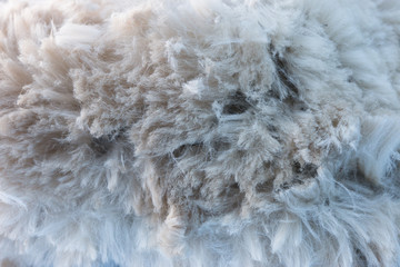 White alpaca fiber
