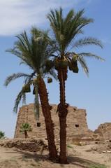 Palm tree in Karnak Temple, Luxor