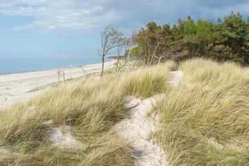 Düne an der Ostsee