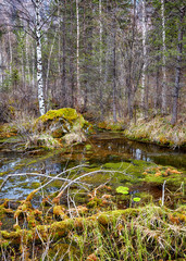 Swampy stream in Altay Taiga