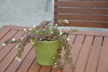 Tischdekoration draußen Blumentopf - Topfpflanze