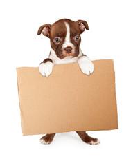 Fototapete - Boston Terrier Puppy Holding Blank Cardboard Sign