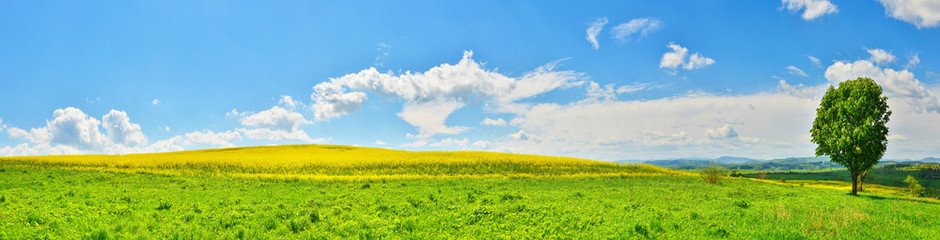 Panoramic view of spring field with green tree