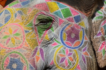 Colorful elephant in Jaipur, India