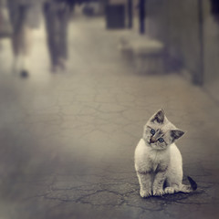 Photo Blinds Cat Kitten On The Street