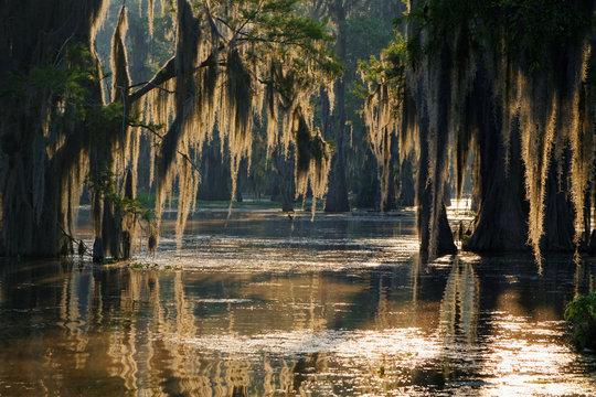 Lumières dans les Bayous de Louisiane