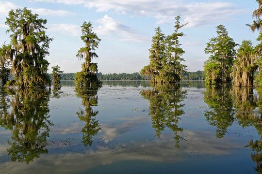 Dans les Bayous de Louisiane