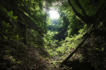 Fototapeta wilderness landscape with green vegetation
