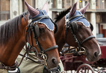 Horse-driven carriage in Vienna
