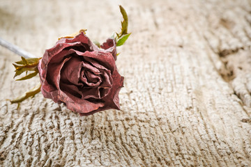 Dry Rose on Wooden Background