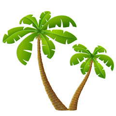 Tropical palm tree with leaves. Group of beach plants
