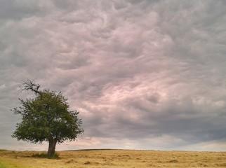 Einsamer Baum in Landschaft