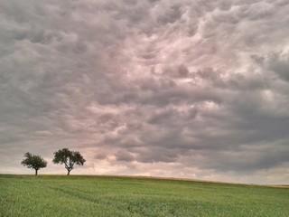 Einsamer Bäume in einer Landschaft