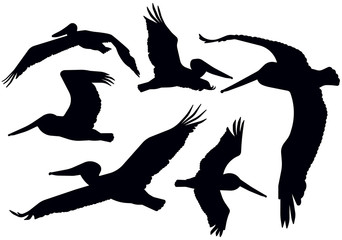 Flying Pelican Silhouettes