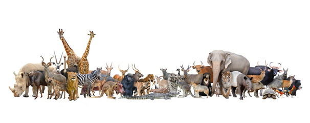 animal of the world Wall mural