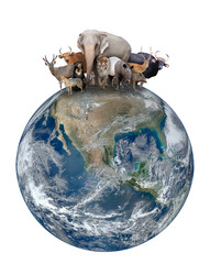 Wall Mural - group of asia animal with planet earth