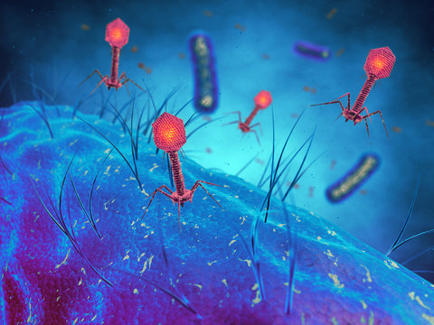 Bacteriophages infecting bacterial cells,Bacterial viruses