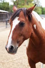 Portrait of nice horse