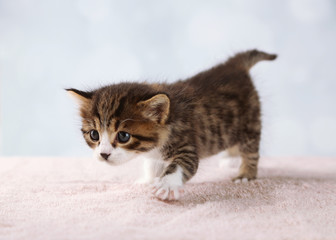 Cute little kitten on light background
