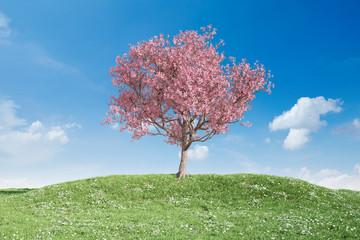 Blühender Kirschbaum auf Wiese vor Himmel