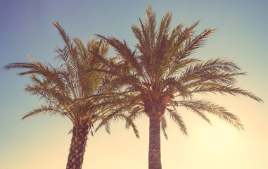 Palm trees in a warm summer sunset