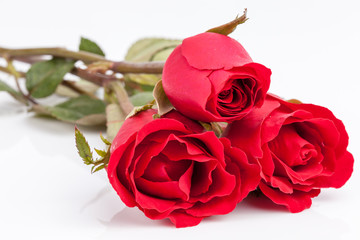 beautiful bouquet of red roses on white background