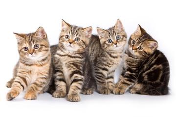 Four striped kitten (isolated on white)