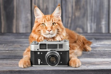 Cat, photography, photo.