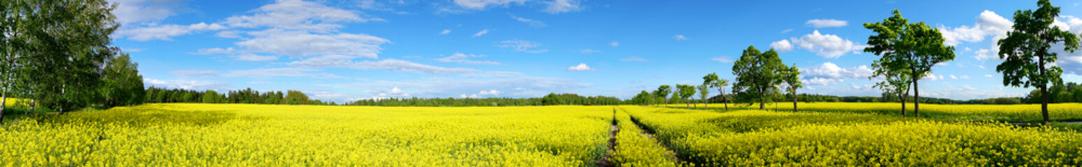 Poster Village rapeseed field panorama