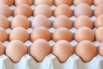 Chicken eggs in paper tray