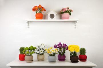 Beautiful flowers in pots on shelf on wall background