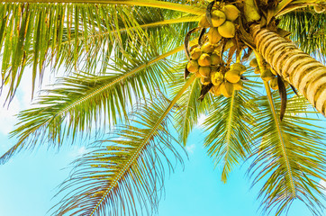 Poster Turquoise Sandy beach with coconut palm