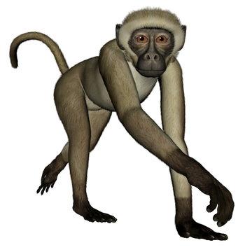 Monkey walking - 3D render