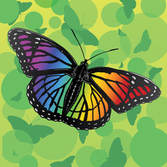 Rainbow Butterfly is an illustration of a rainbow butterfly.