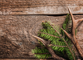 Evergreen Branch and Deer Antler on Wooden Surface